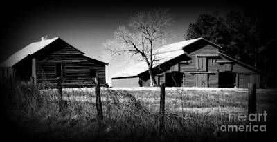 Photograph - Country Life by Cynthia Mask
