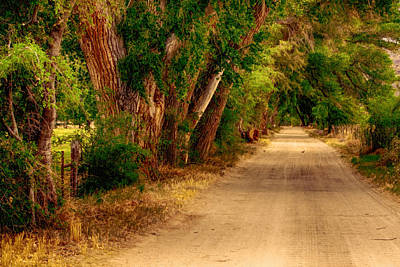 Photograph - Country Road by Fred Larson