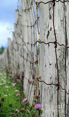 Photograph - Country Side Fence by France Laliberte