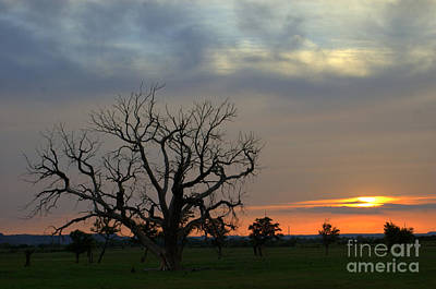 Photograph - Tree Of Home by Anjanette Douglas