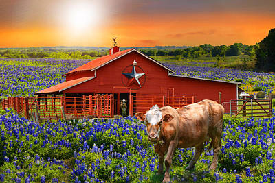 Country Stars Art Print by Lynn Bauer