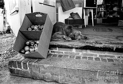Photograph - Country Store Dog by Tom Brickhouse