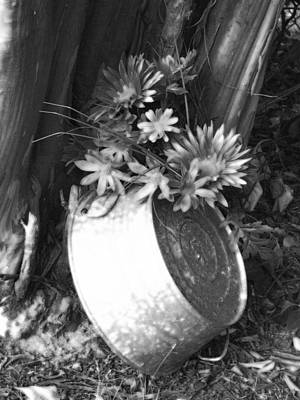 Photograph - Country Summer - Bw 01 by Pamela Critchlow