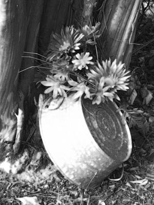 Photograph - Country Summer - Bw 02 by Pamela Critchlow