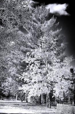 Country Trees Art Print by John Rizzuto