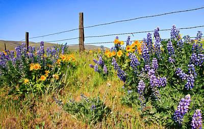 Caravaggio - Country Wildflowers by Athena Mckinzie