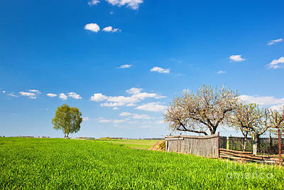 Leaves Photograph - Countryside Landscape During Spring With Solitary Trees And Fence by Michal Bednarek