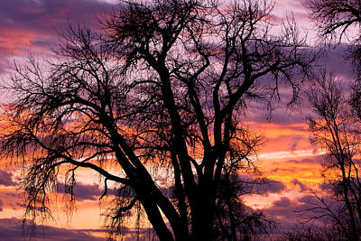County Sunset Art Print by James BO  Insogna