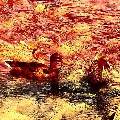 Animals Photograph - Couple Of Ducks by Jason Michael Roust