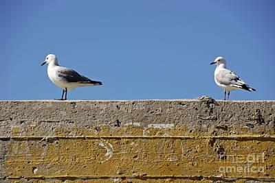 Couple Of Seagulls On A Wall Art Print by Sami Sarkis