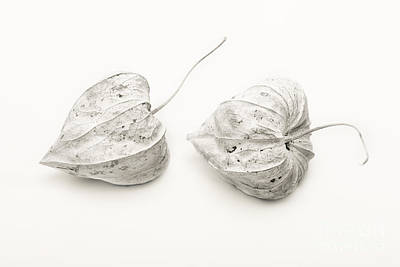 Watercolor Typographic Countries - Couple Physalis by Sviatlana Kandybovich