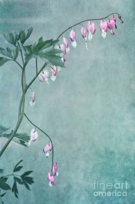 Bleeding Hearts Photograph - Couricino by Priska Wettstein