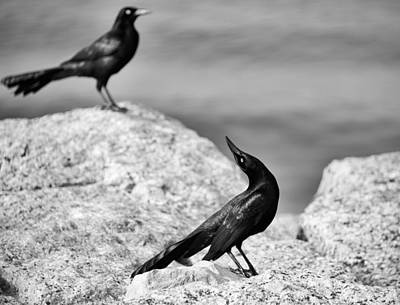 Photograph - Courtship by Mary Lee Dereske
