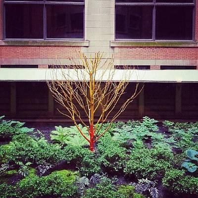 Paint Photograph - Courtyard Garden.  by Jill Tuinier