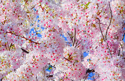 Photograph - Covered In Blossoms by Jeff at JSJ Photography