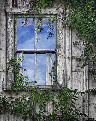 Old Abandoned Farmhouse Photograph - Covered In Vines - Old House Window by Nikolyn McDonald