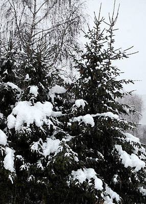Cover Photograph - Covered Snow Firs by Gina Dsgn