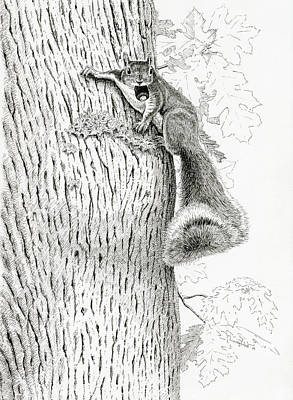 Coveting Nuts Art Print