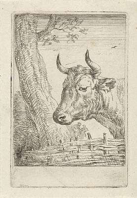 Fence Drawing - Cow At A Willow Fence, Aert Schouman, Paulus Potter by Artokoloro