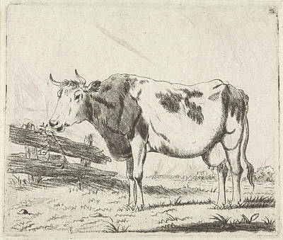 Fence Drawing - Cow At Fence, Pieter Janson by Pieter Janson