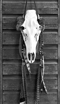 Cow Elk Skull And Feathers Art Print by Karon Melillo DeVega