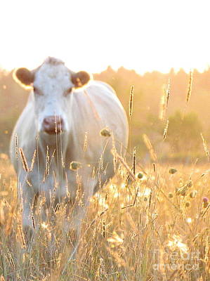 Photograph - Cow Field  by France Laliberte