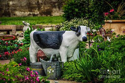 Photograph - Cow by Grace Grogan