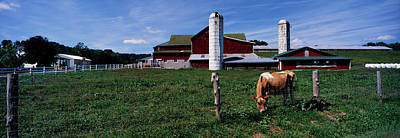 Cow Grazing In A Farm, Amish Country Art Print by Panoramic Images