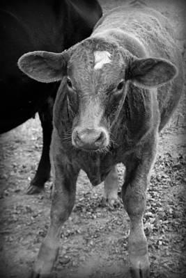 Photograph - Cow II by Kelly Hazel