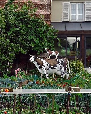 Photograph - Cow On Cow Garden Art by Barbie Corbett-Newmin