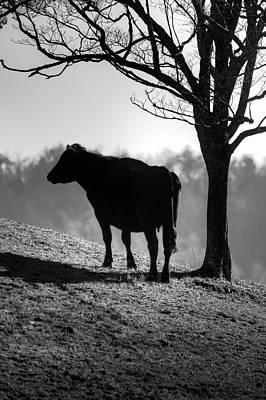 Photograph - Cow On The Hill by Michael Eingle