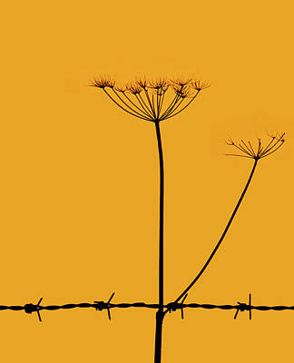 Keck Photograph - Cow Parsley Sunset by Tracey Davidson