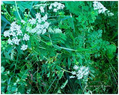 Photograph - Cow Parsnip Twirl by Kendall Kessler
