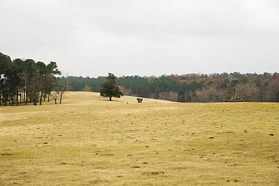Photograph - Cow Pasture 2 by Mez