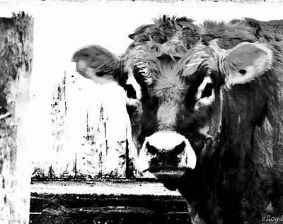 Pen And Ink Of Barn Photograph - Cow  Pen And Ink by Carol Lloyd