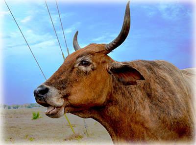 Photograph - Cow Photo 3 by Amanda Vouglas