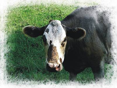 Photograph - Cow Portrait by Joe Duket