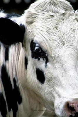 Barnyard Digital Art - Cow Right Profile by Thomas Woolworth