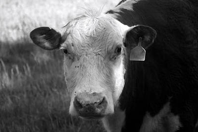 Photograph - Cow by Scott Sanders