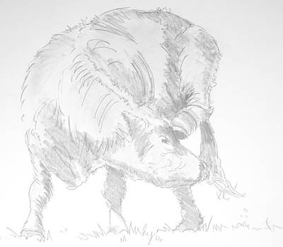 Drawing - Cow Scratching Drawing by Mike Jory