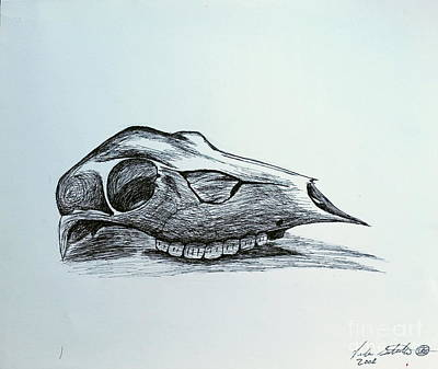 Drawing - Cow Skull 2 by Luke Galutia