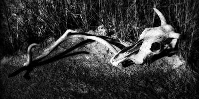 Photograph - Cow Skull And Antler No. 2 by Sandra Selle Rodriguez