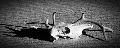 Photograph - Cow Skull And Antler Still Liife by Sandra Selle Rodriguez