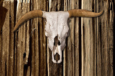 Photograph - Cow Skull On Wood Wall From Ghost Ranch by Greg Kluempers