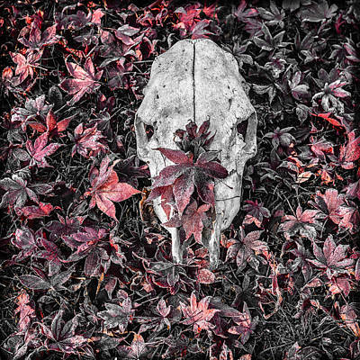 Photograph - Cow Skull With Maple Leaves by Ronda Broatch