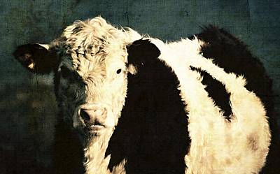 Photograph - Cow With Blue Background by Marysue Ryan
