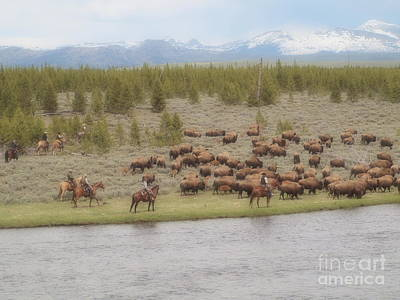 Photograph - Cowboys And Bison by Tammy Bullard