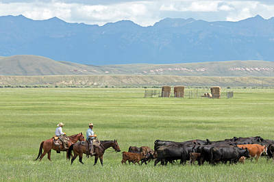 Cattle Drive Photograph - Cowboys Herding On A Cattle Ranch by Jim West