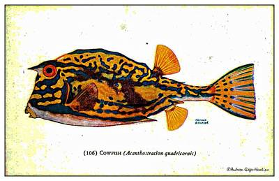 Digital Art - Cowfish 1932 Vintage Postcard by Audreen Gieger