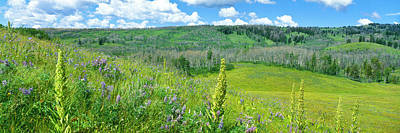 Cowparsnip, Lupine And Larkspur Art Print by Panoramic Images